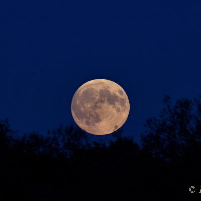 Supermoon rising, 27th September 2015 by Dawn Sunrise